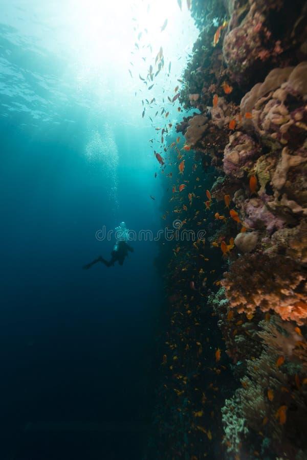 红海的珍宝 免版税库存图片