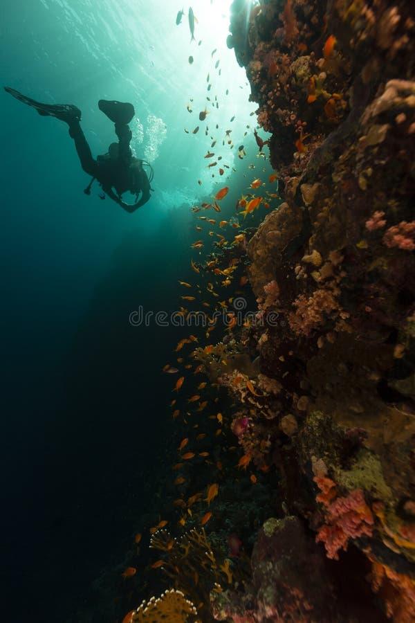 红海的珍宝 库存图片