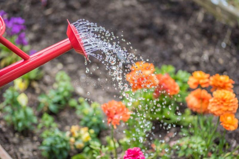 红潮用落从在五颜六色的春天花上的喷口的水能 库存照片