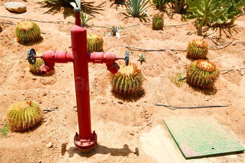 红火消防栓浇灌干燥植物的自来水供应离开墨西哥锋利的新仙人掌脊椎沙子概念与交战的天旱 库存图片