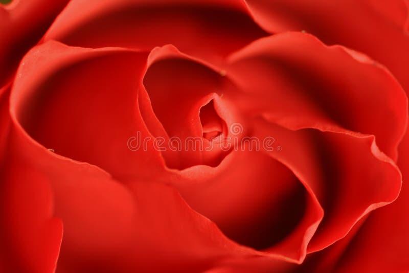 红色上升了 免版税图库摄影