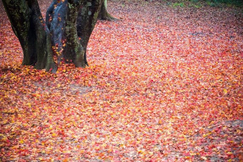 红色下落的叶子特写镜头 免版税库存照片