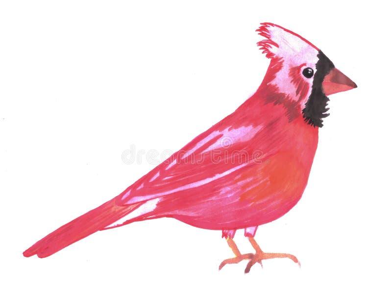 红色主要鸟水彩Cardinalis cardinalis 向量例证