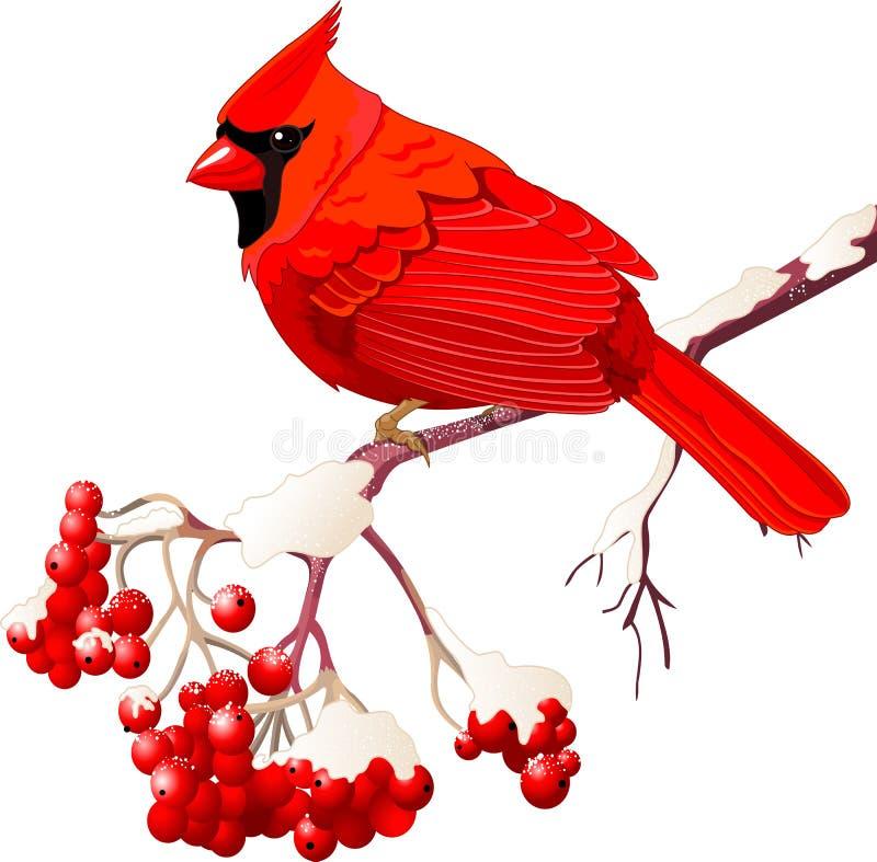 红色主要鸟 库存例证