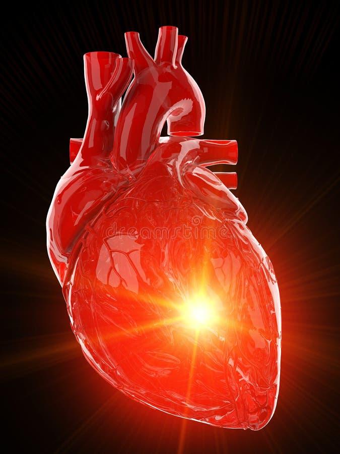 红色光滑的人的心脏 库存例证