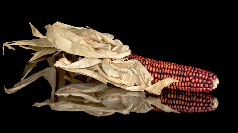 红色印第安玉米的唯一耳朵在桌上的 免版税库存照片