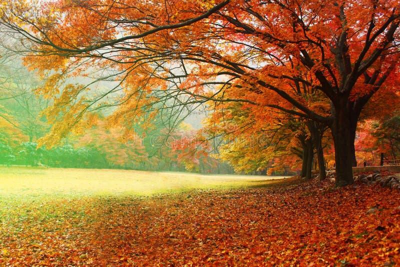 红色叶子季节 库存图片