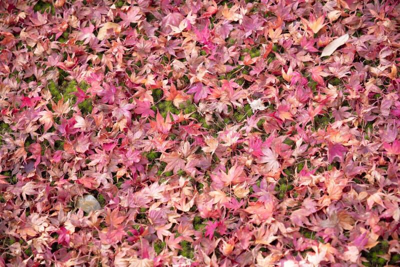 红色叶子秋天地面 库存照片