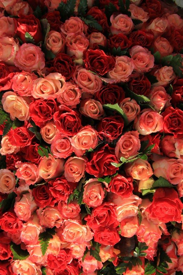 红色和桃红色玫瑰 图库摄影