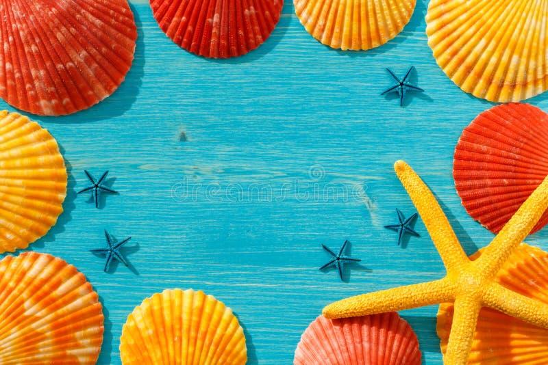 红色和橙色贝壳和黄色海星在一张蓝色桌上 库存图片