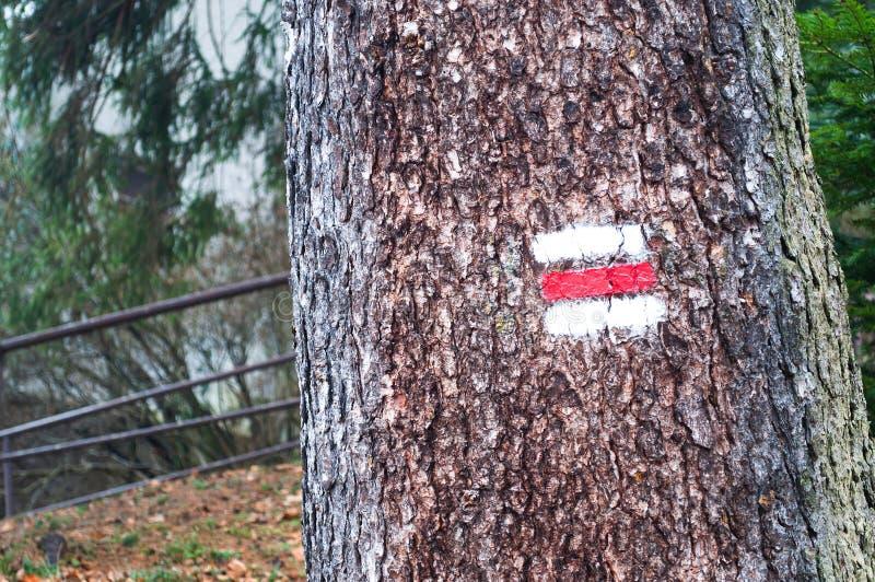 红色和白色供徒步旅行的小道在森林里签署在树的标志 免版税库存照片