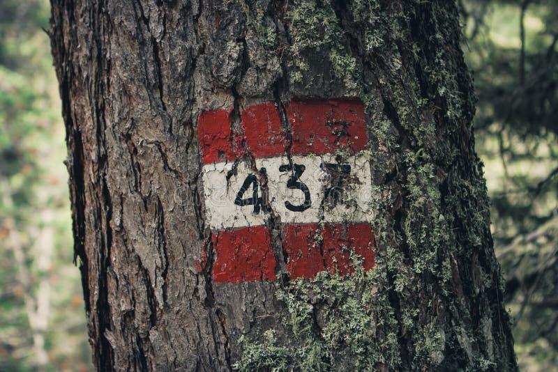 红色和白色落后在树的标志,读437,在肾上腺皮质激素D ` 免版税库存照片