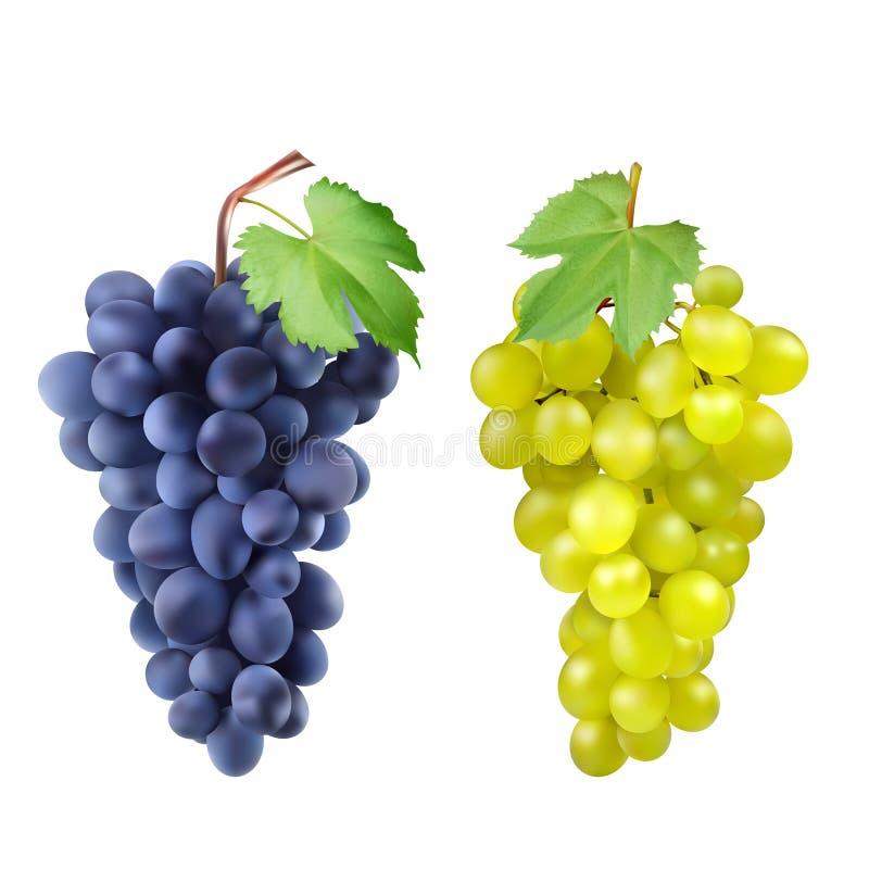 红色和白色食用葡萄,葡萄酒 新鲜水果,3d象集合 红色葡萄的和设计的白色3d集合 向量例证