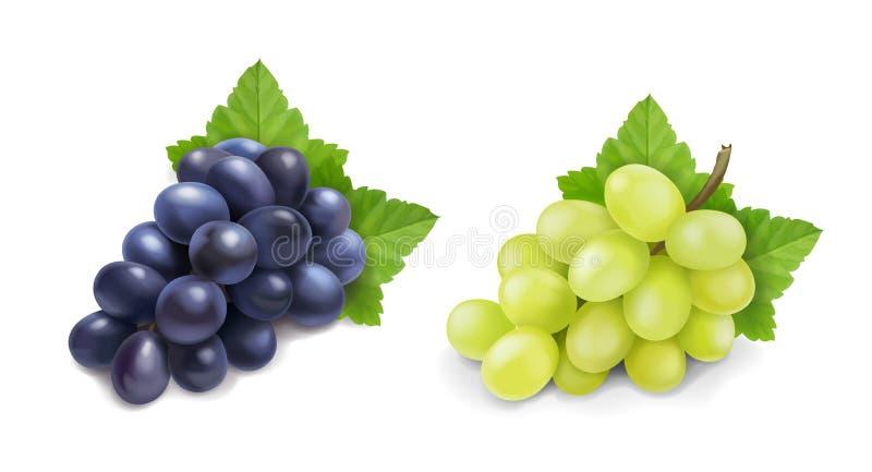 红色和白色食用葡萄 葡萄酒现实束传染媒介象集合 向量例证