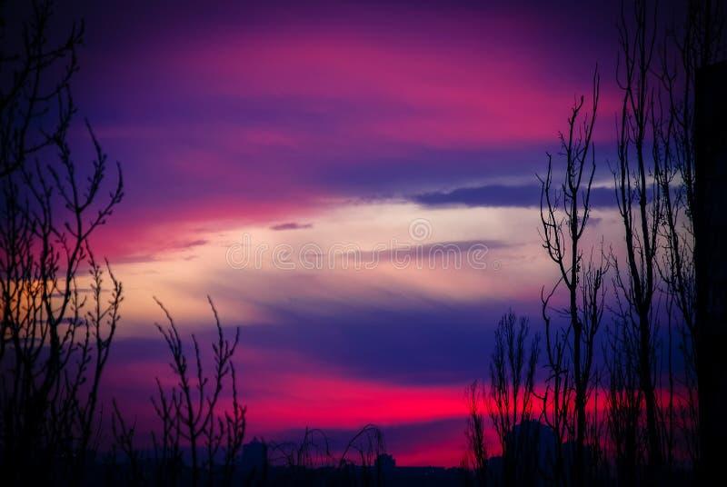 绯红色和蓝天树 免版税库存照片