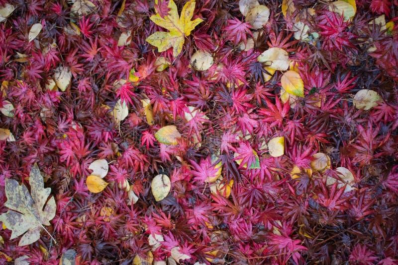 红色和黄色秋叶 图库摄影