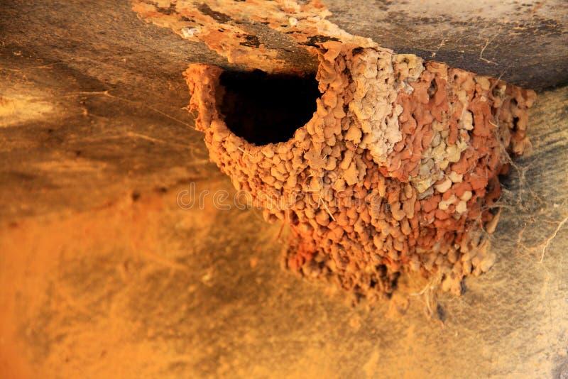 红色和黄色燕子巢 免版税图库摄影