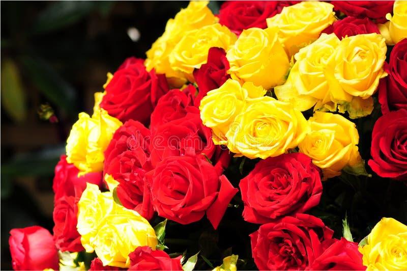 红色和黄色玫瑰 图库摄影