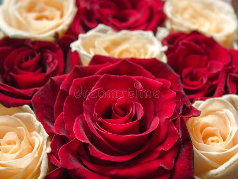 红色和黄色花卉玫瑰背景 免版税图库摄影