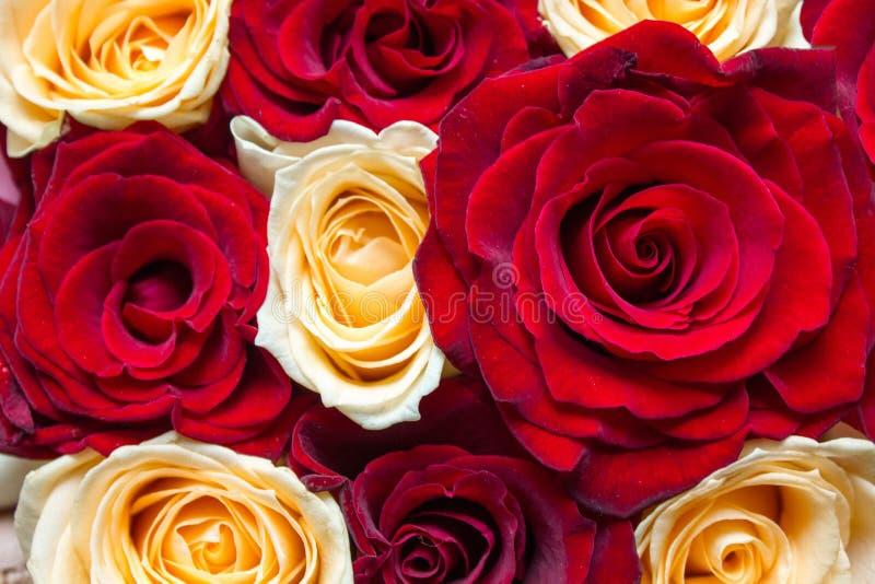 红色和黄色花卉玫瑰背景 免版税库存照片