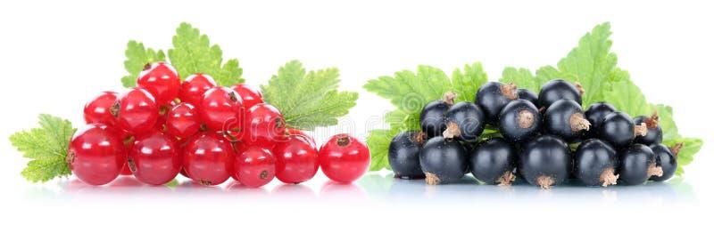 红色和黑醋栗无核小葡萄干莓果 免版税库存照片