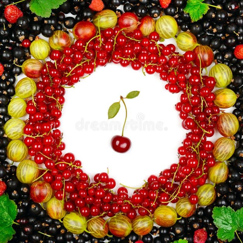 红色和黑醋栗,鹅莓,莓 图库摄影