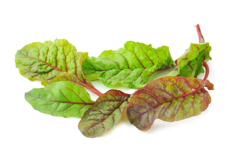 红色唐莴苣沙拉叶子 免版税图库摄影
