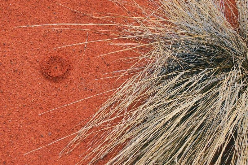红色土壤和当地人Spinifex, Uluru 库存图片