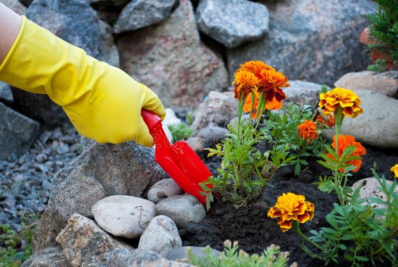 红色塑料小铲在黄色橡胶手套的手上,在地面上的春天工作,松懈,种植花 库存图片