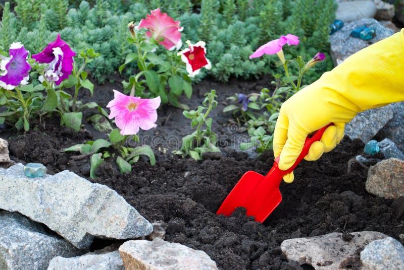 红色塑料小铲在黄色橡胶手套的手上,在地面土壤的春天工作,松懈,种植花 库存照片