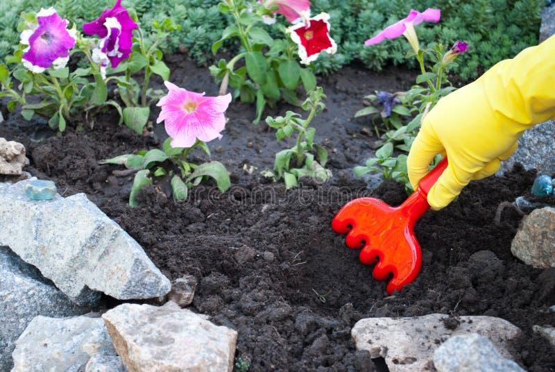 红色塑料犁耙在黄色橡胶手套,在地面清疏的春天工作的手上,松懈种植花 库存照片