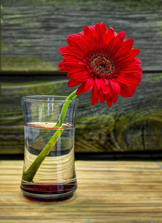 红色大丁草在竹桌上 免版税库存照片