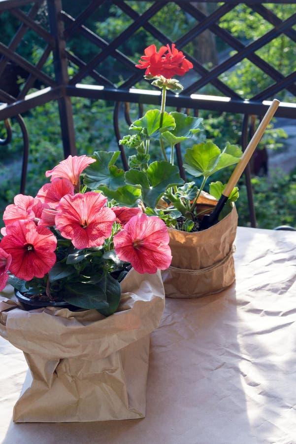 红色天竺葵花和桃红色和紫色喇叭花花在阳台平衡的太阳的 免版税库存图片