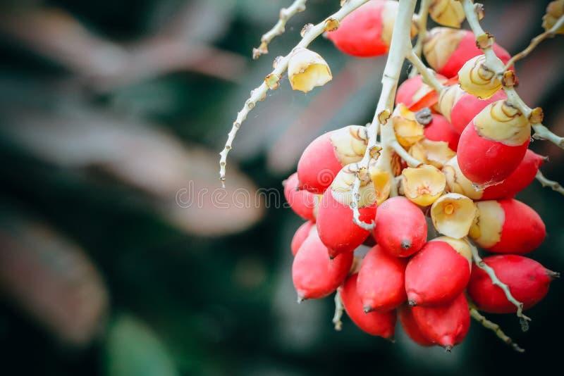 红色封印棕榈焦点  图库摄影