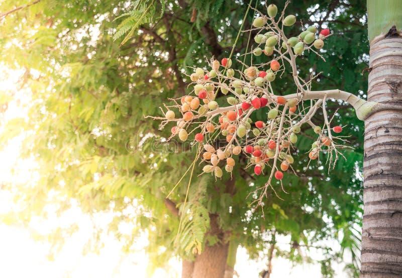 红色封印棕榈 图库摄影