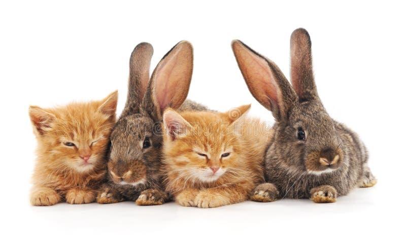 红色小猫和兔子 免版税库存照片