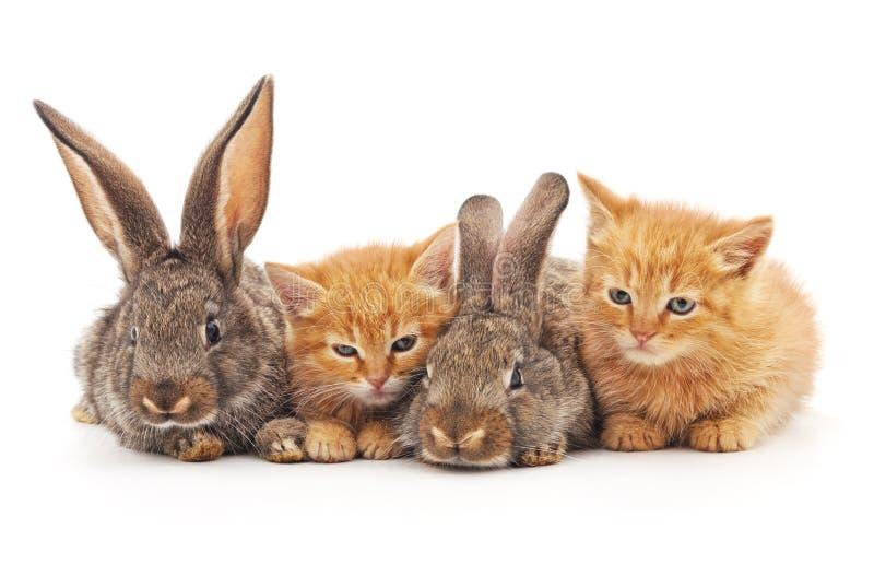 红色小猫和兔子 库存照片
