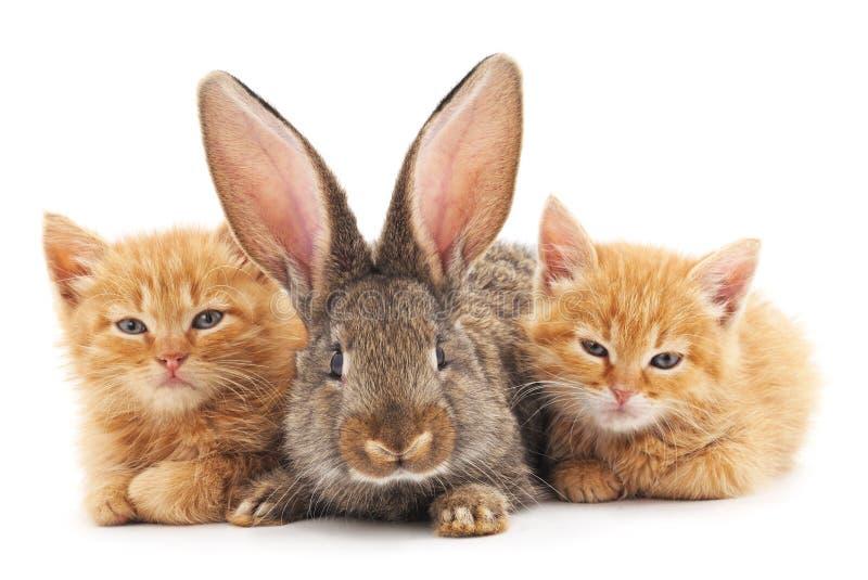 红色小猫和兔宝宝 免版税库存图片