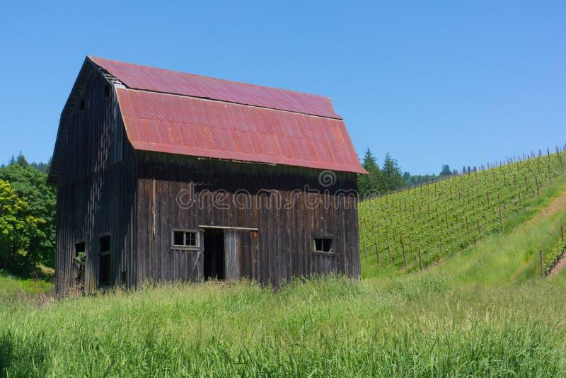 红色屋顶老谷仓在葡萄园里 库存照片