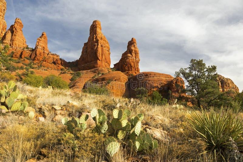红色岩石和仙人掌厂沙漠风景在Sedona 库存图片