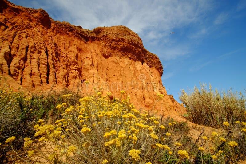 红色岩石和花在普腊亚da Falesia - Falesia海滩在阿尔加威,葡萄牙 免版税库存照片