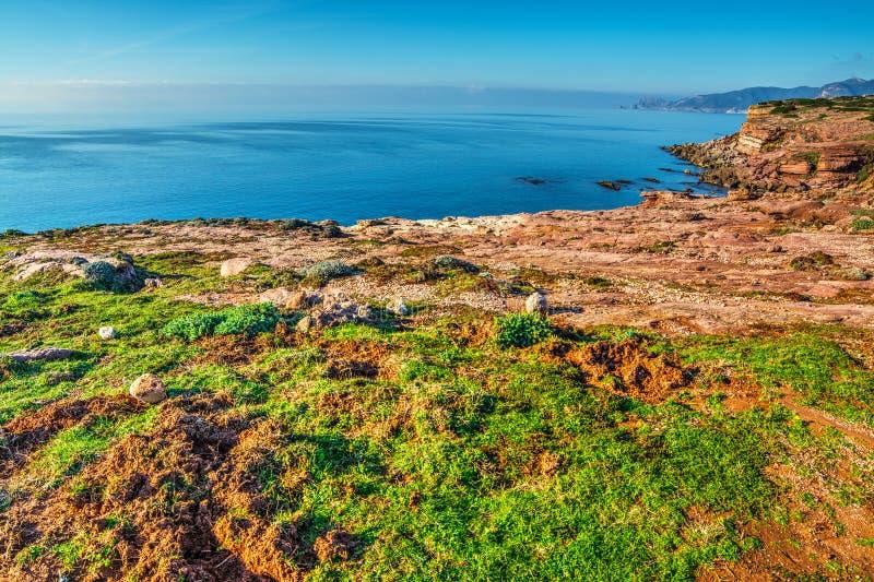 红色岩石和绿色植物由海 库存图片