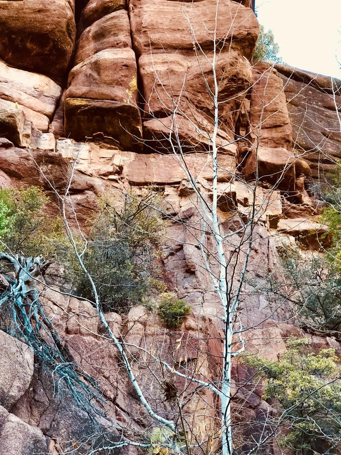 红色岩石山白色树 图库摄影