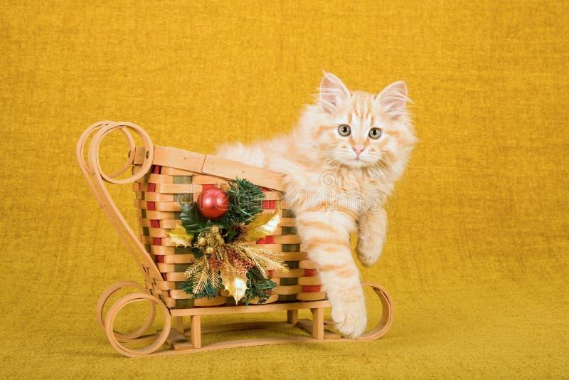 红色平纹西伯利亚森林猫小猫在竹圣诞节雪橇里面坐金背景 库存图片