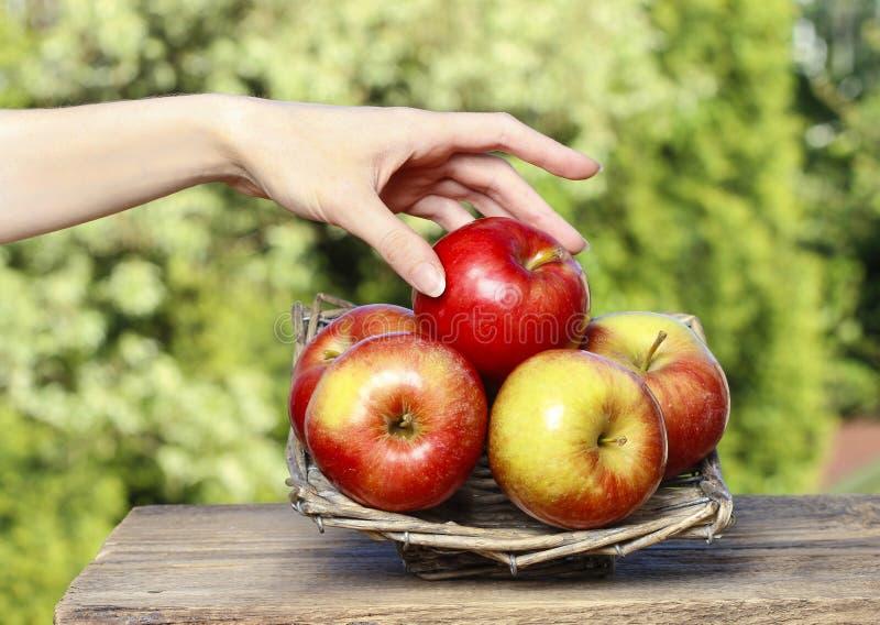 红色成熟苹果篮子在木桌上的 库存图片