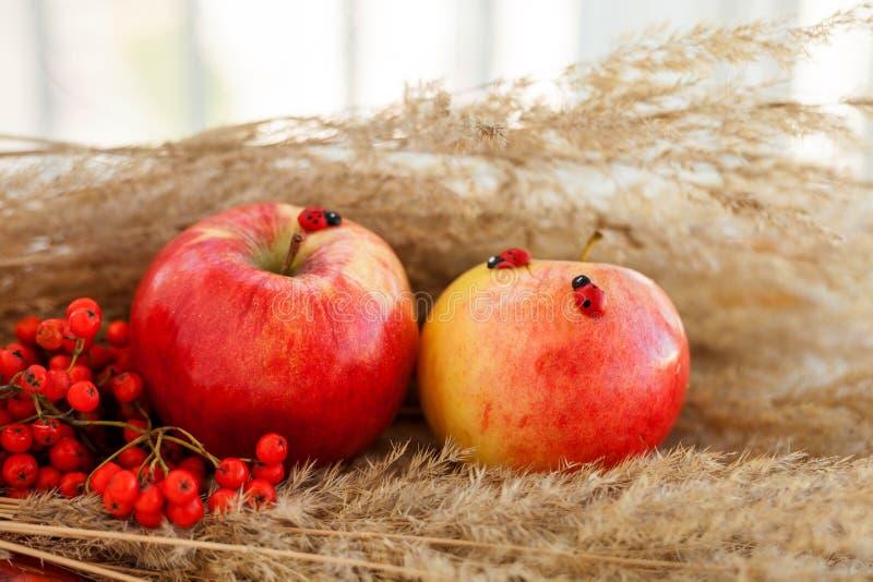 红色成熟苹果静物画在小尖峰的 免版税库存照片