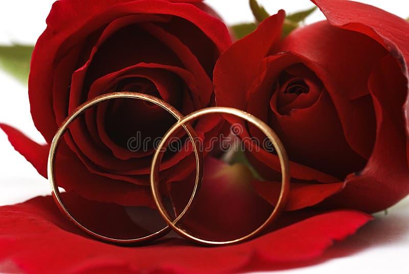 红色敲响婚姻的玫瑰二 图库摄影