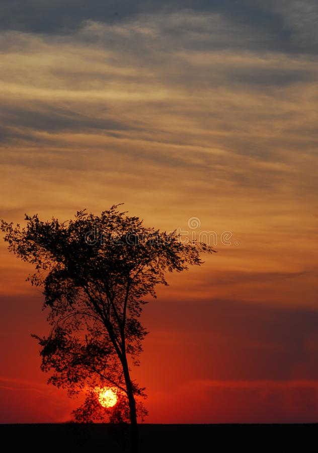 红色日落 库存图片