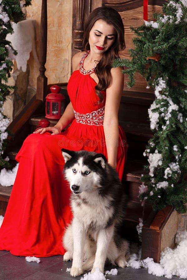 红色晚礼服的美女坐与她的狗的步,爱斯基摩 在圣诞节装饰的屋子的背景 图库摄影