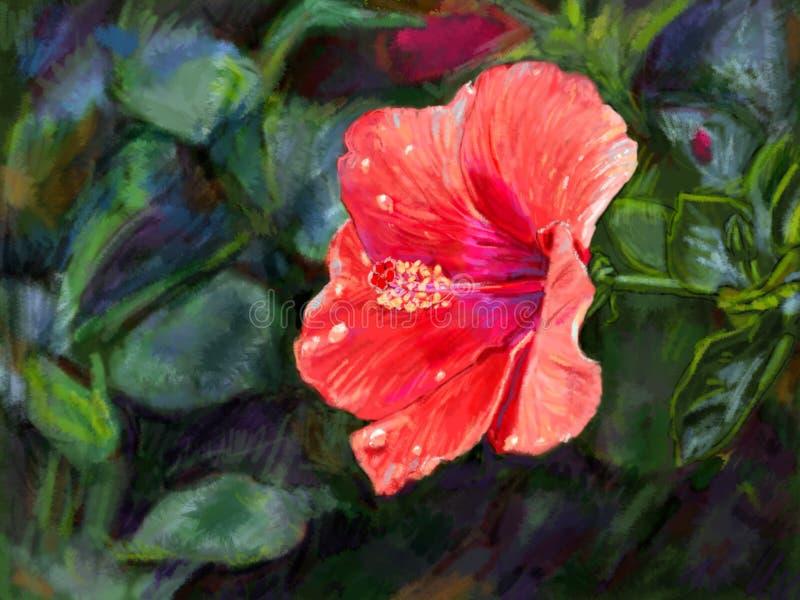 红色木槿花数字式绘画  向量例证